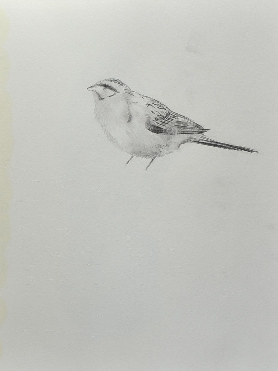 pinceau (10)